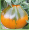 Japanese Trifele Orange
